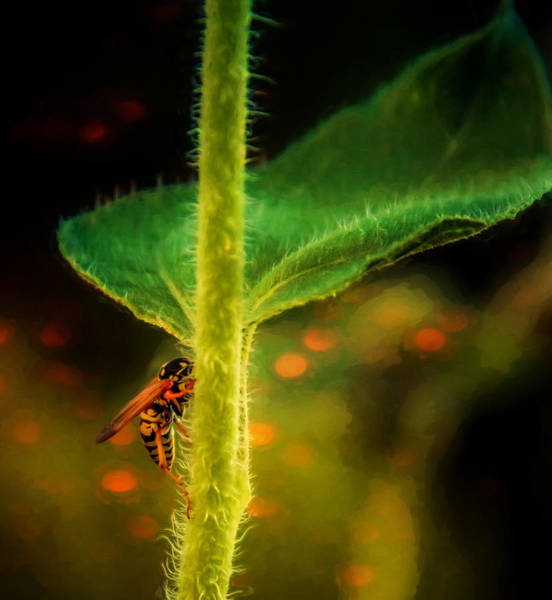 Photograph - Dance Of The Wasp by Janice Bennett