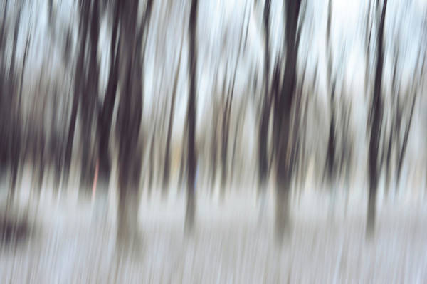 Photograph - Dance Of Winter Trees. Impressionism by Jenny Rainbow