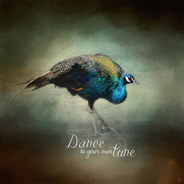 Photograph - Dance To Your Own Tune - Peacock Art by Jai Johnson