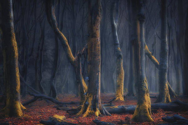 Photograph - Dancers Of The Night by Rob Visser