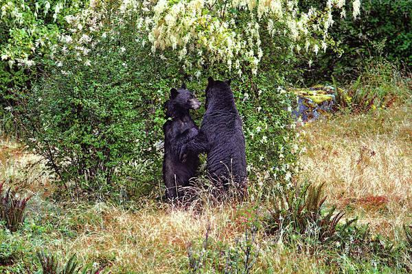 Photograph - Dancing Bears And A Big Bear Hug by Peggy Collins