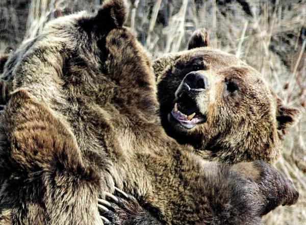 Photograph - Dancing Bears by Frank Vargo