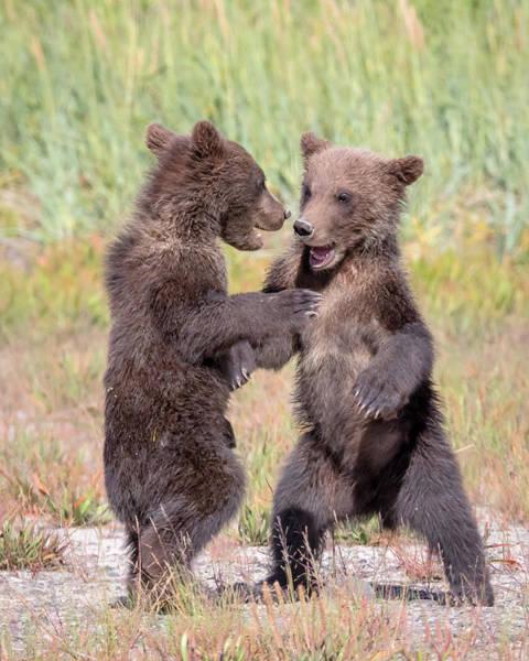 Dancing Bears Photograph - Dancing Bears by Jack Bell