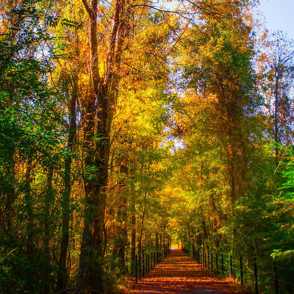 Photograph - Dancing Colors On A Forest Path by Parker Cunningham