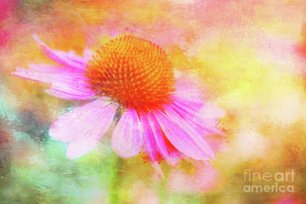 Photograph - Dancing Coneflower Abstract by Anita Pollak