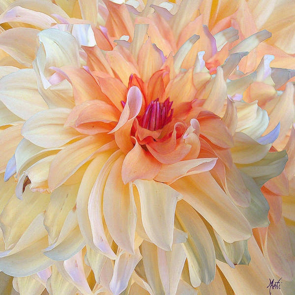 Bright Flowers Mixed Media - Dancing Dahlia by Michele Avanti