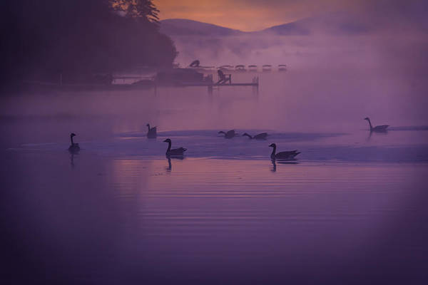 Photograph - Dancing Geese by Francisco Gomez