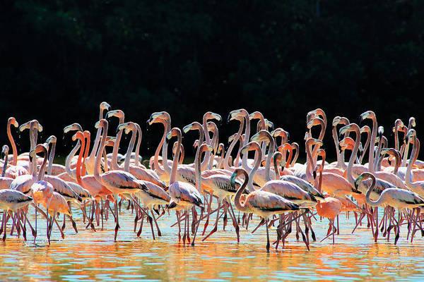 Photograph - Dancing Flamingos by Renee Sullivan