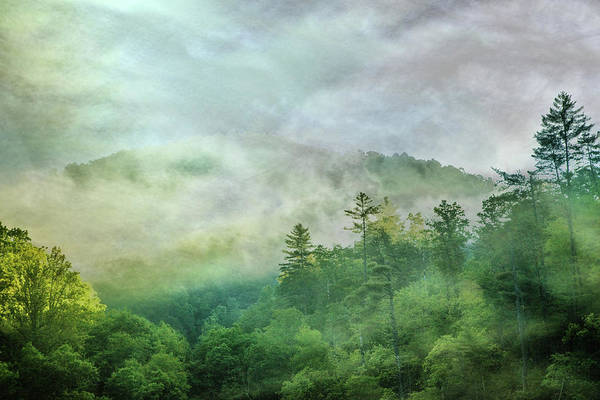 Photograph - Dancing Fog In The Forest by Debra and Dave Vanderlaan