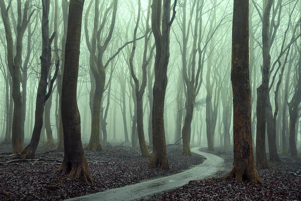 Wall Art - Photograph - Dancing In The Mist II by Martin Podt