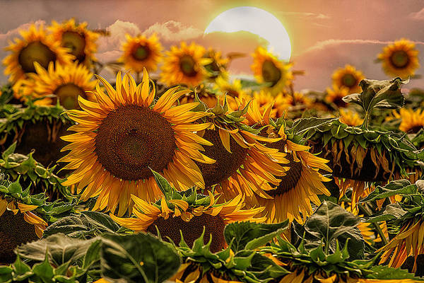 Photograph - Dancing In The Sun by Wolfgang Stocker
