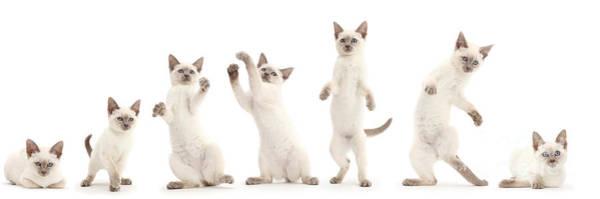 Photograph - Dancing Kitten by Warren Photographic