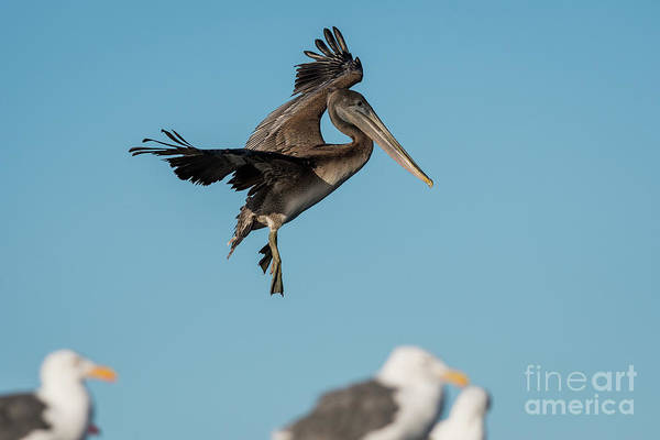 Photograph - Dancing On Air by Robert Potts