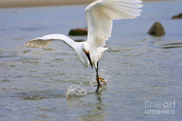 Photograph - Dancing On Water by Angela Rath