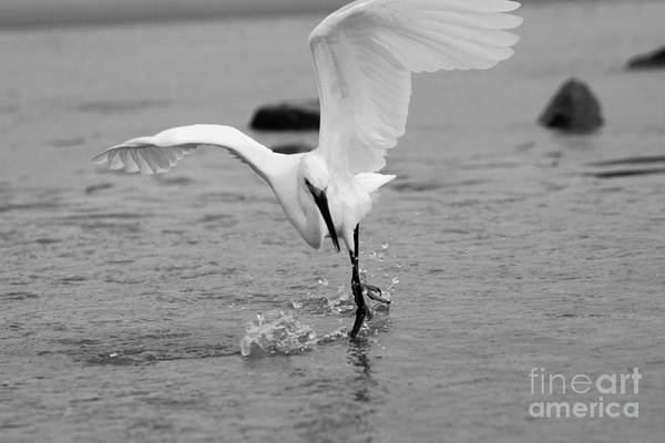 Photograph - Dancing On Water In Black And White by Angela Rath