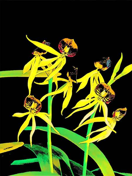 Photograph - Dancing Orchids Yellow by Joalene Young