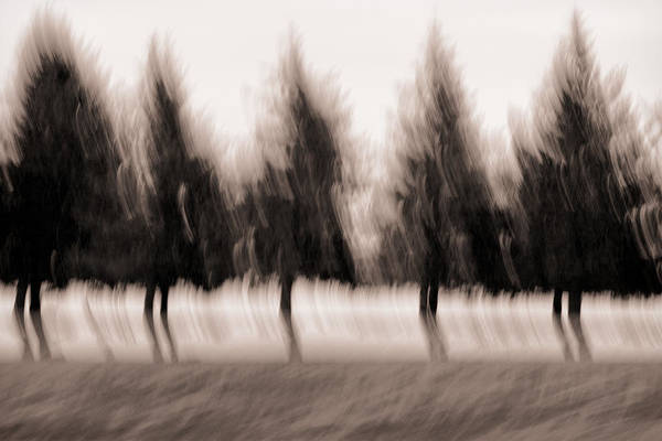 Whimsy Wall Art - Photograph - Dancing Pines by Carol Leigh