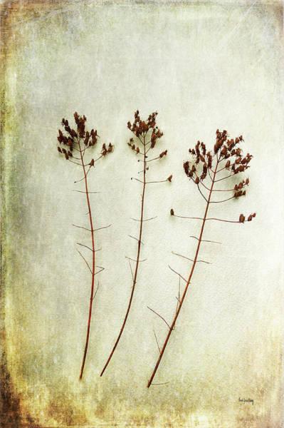 Photograph - Dancing Trio by Randi Grace Nilsberg