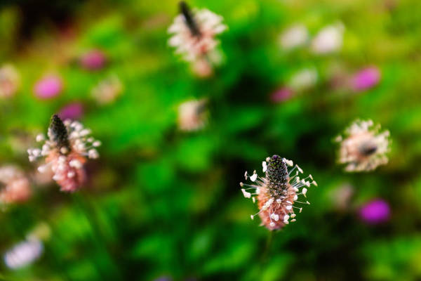 Photograph - Dancing Wildflowers by Chris Bordeleau