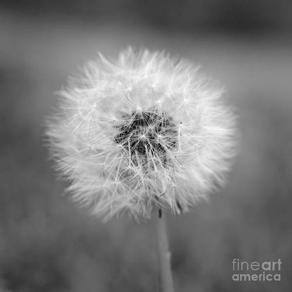 Photograph - Dande by Patrick M Lynch