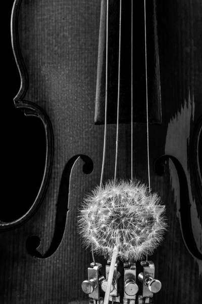 Dandelion Puff Photograph - Dandelion And Violin by Garry Gay
