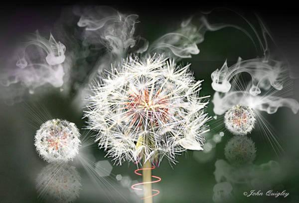 Photograph - Dandelion Clock by John Quigley