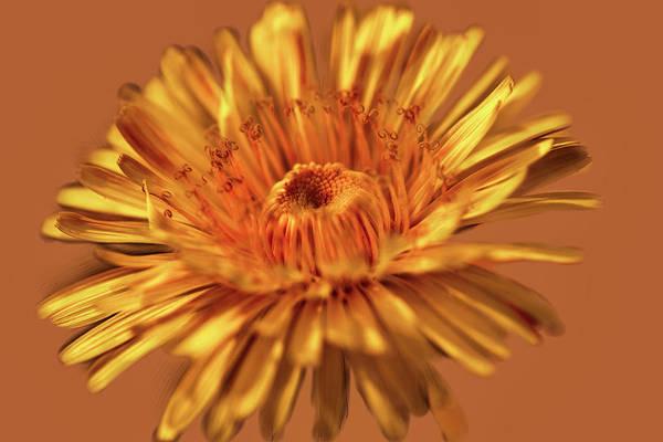 Digital Art - Dandelion Close #g3 by Leif Sohlman