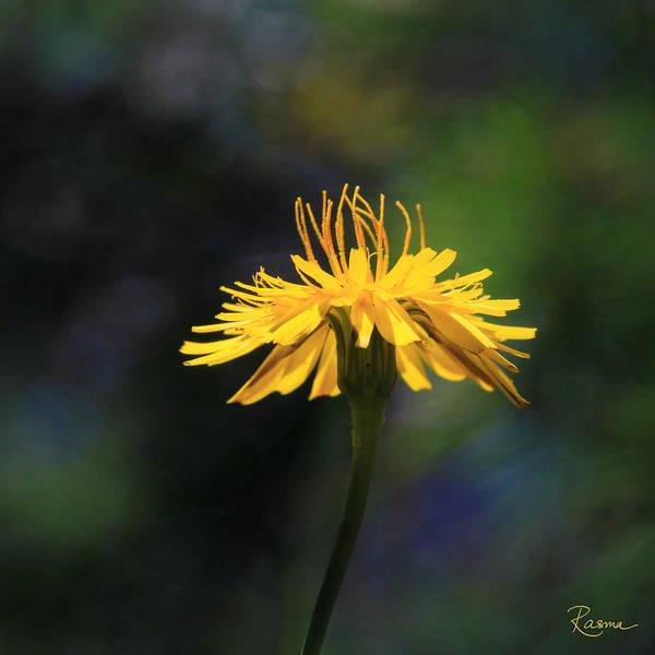 Photograph - Dandelion Dance by Rasma Bertz