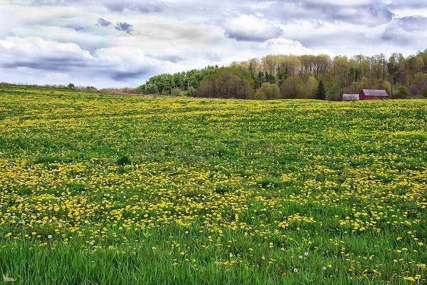 Photograph - Dandelion Field With Barn by Lise Winne