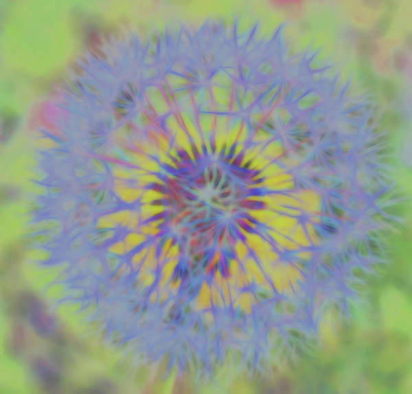 Photograph - Dandelion Flower Power Square by Terry DeLuco
