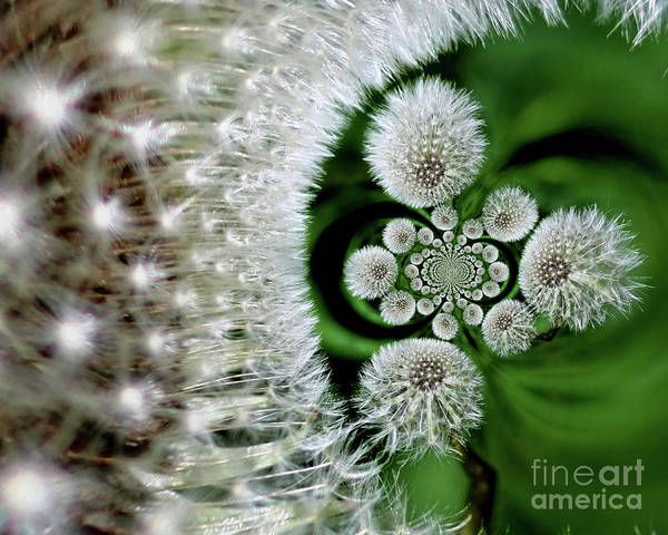 Photograph - Dandelion Fluff Abstract by Smilin Eyes  Treasures