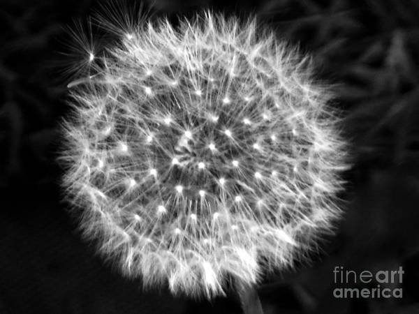 Photograph - Dandelion Fuzz by Rockin Docks Deluxephotos