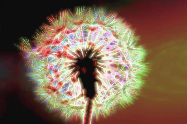 Photograph - Dandelion Glow Bright by Kay Brewer