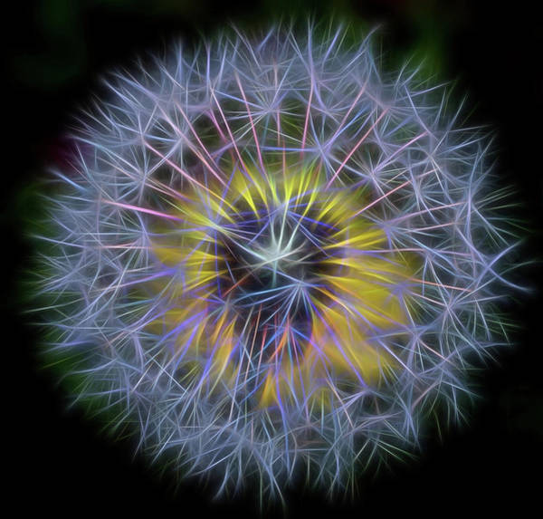 Photograph - Dandelion Glow Square by Terry DeLuco