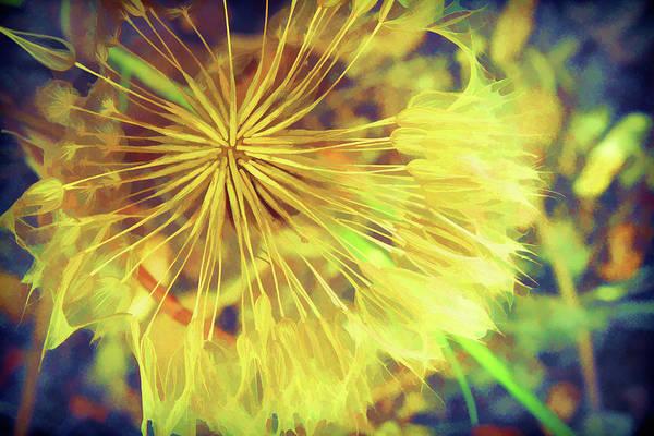 Wall Art - Digital Art - Dandelion Harvest by Terry Davis
