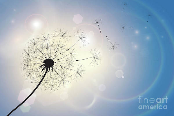 Wall Art - Photograph - Dandelion In A Summer Breeze by Jane Rix