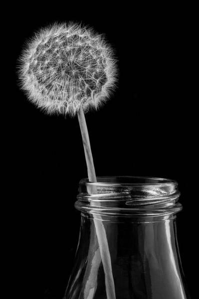 Wall Art - Photograph - Dandelion In Bottle by Garry Gay