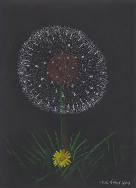 Pastel - Dandelion by M Valeriano