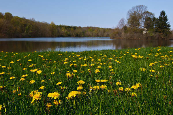 Photograph - Dandelion Lake by James Reed