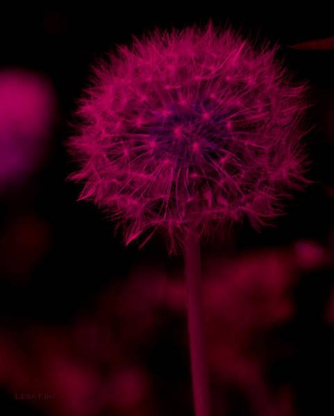 Photograph - Dandelion Neon Pink by Lesa Fine