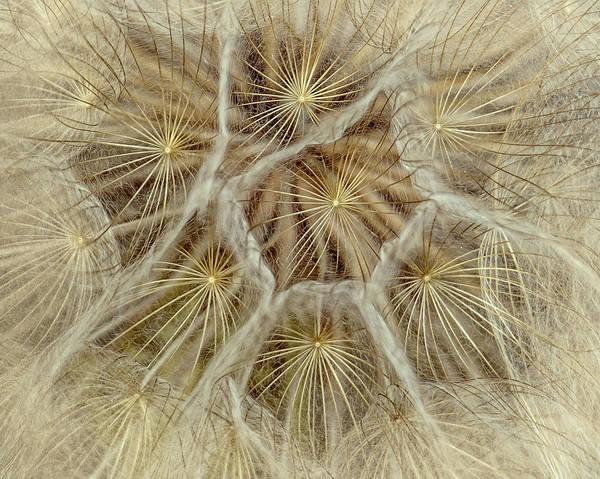 Photograph - Dandelion Particles by Janice Bennett