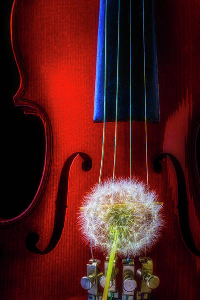 Dandelion Puff Photograph - Dandelion Puff And Violin by Garry Gay