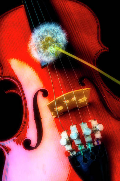 Dandelion Puff Photograph - Dandelion Resting On Violin by Garry Gay
