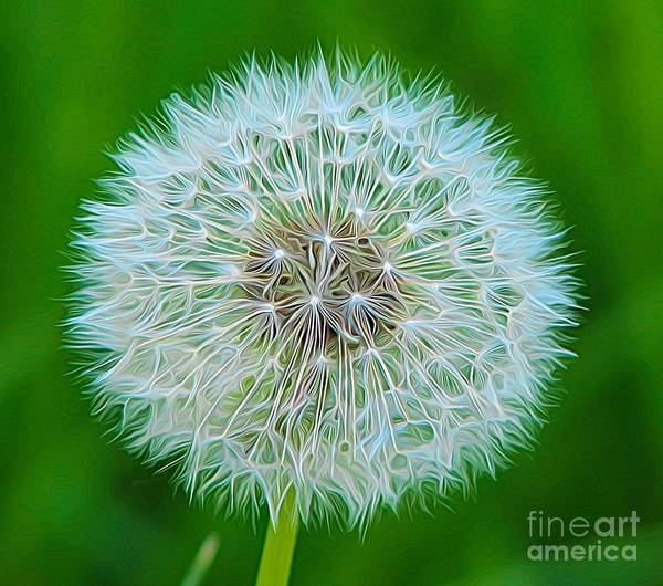 Photograph - Dandelion Seed Head Expressionist Effect by Rose Santuci-Sofranko