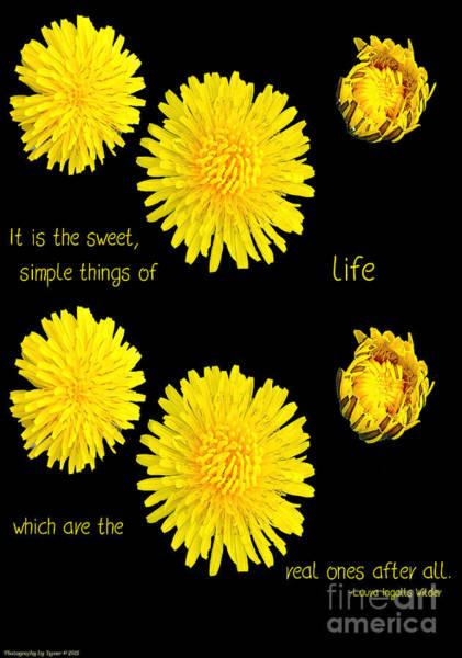 Photograph - Dandelion Simplicity by Gena Weiser