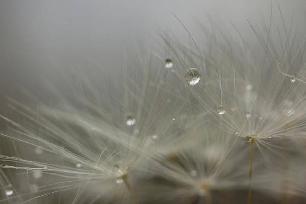 Photograph - Dandy Dew Two by Brian Hale