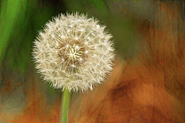 Photograph - Dandy Glow by Patricia Montgomery