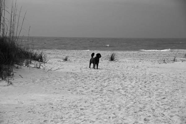 Dandy On The Beach Art Print