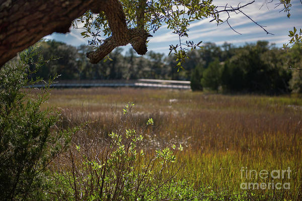 Photograph - Daniel Island Expansive Salt Marsh by Dale Powell