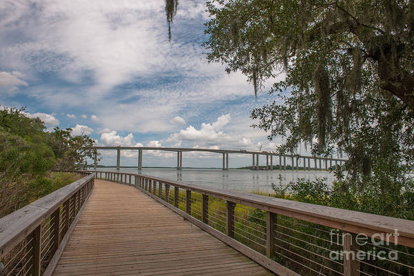 Photograph - Daniel Island Walking Path by Dale Powell